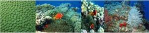 Corais e Criaturas Marinhas